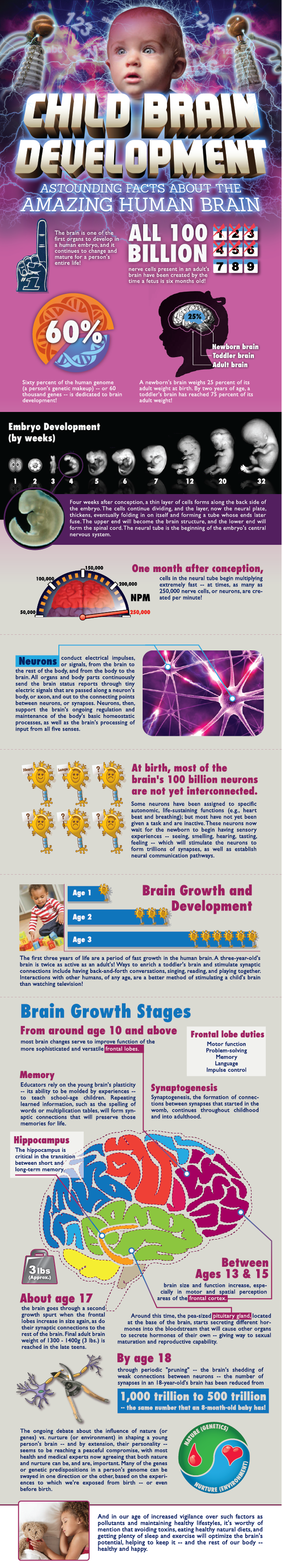 brain_development